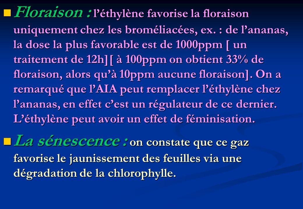 Floraison : léthylène favorise la floraison uniquement chez les broméliacées, ex. : de lananas, la dose la plus favorable est de 1000ppm [ un traiteme