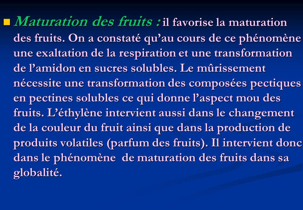 Maturation des fruits : il favorise la maturation des fruits. On a constaté quau cours de ce phénomène une exaltation de la respiration et une transfo