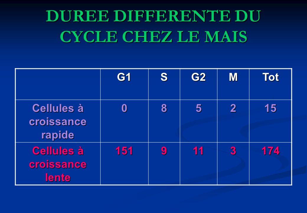 DUREE DIFFERENTE DU CYCLE CHEZ LE MAIS G1SG2MTot Cellules à croissance rapide 085215 Cellules à croissance lente 1519113174