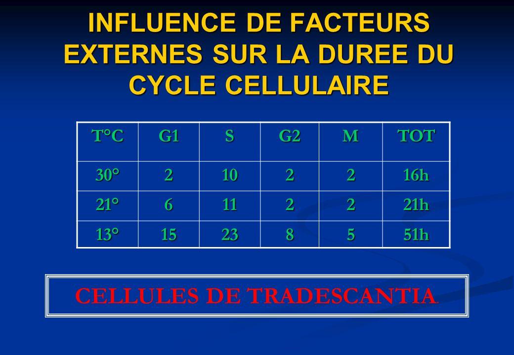 T°CG1SG2MTOT 30°2102216h 21°6112221h 13°15238551h INFLUENCE DE FACTEURS EXTERNES SUR LA DUREE DU CYCLE CELLULAIRE CELLULES DE TRADESCANTIA.