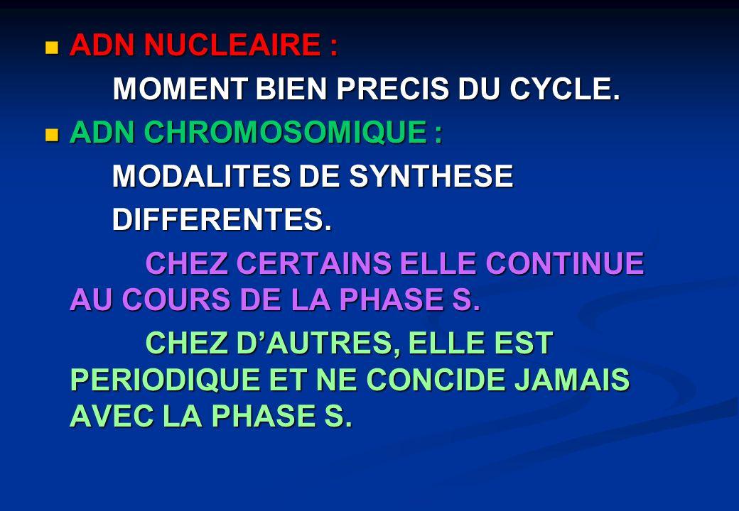 ADN NUCLEAIRE : ADN NUCLEAIRE : MOMENT BIEN PRECIS DU CYCLE. ADN CHROMOSOMIQUE : ADN CHROMOSOMIQUE : MODALITES DE SYNTHESE MODALITES DE SYNTHESE DIFFE