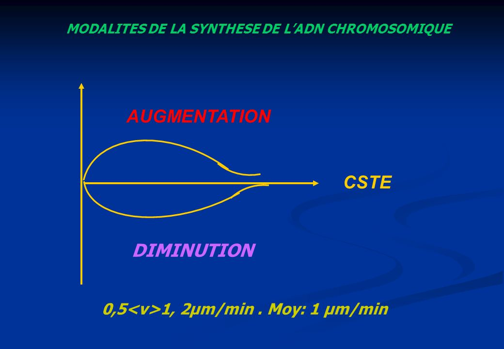 MODALITES DE LA SYNTHESE DE LADN CHROMOSOMIQUE AUGMENTATION DIMINUTION 0,5 1, 2µm/min. Moy: 1 µm/min CSTE
