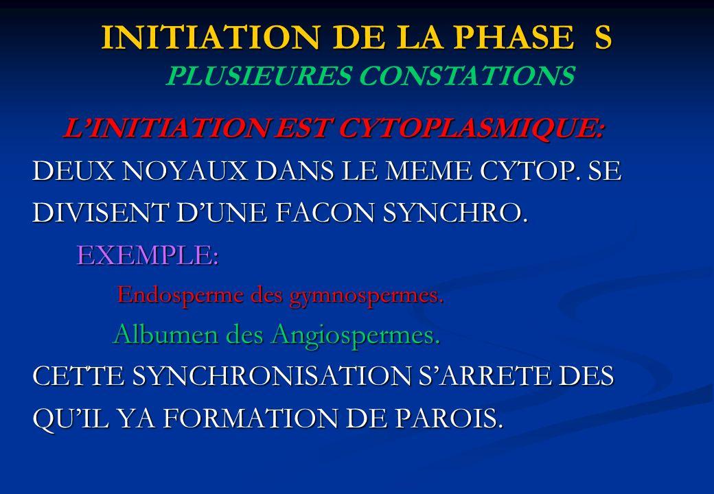 INITIATION DE LA PHASE S LINITIATION EST CYTOPLASMIQUE: DEUX NOYAUX DANS LE MEME CYTOP. SE DIVISENT DUNE FACON SYNCHRO. EXEMPLE: Endosperme des gymnos
