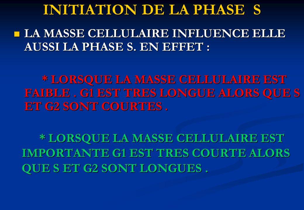 LA MASSE CELLULAIRE INFLUENCE ELLE AUSSI LA PHASE S. EN EFFET : LA MASSE CELLULAIRE INFLUENCE ELLE AUSSI LA PHASE S. EN EFFET : * LORSQUE LA MASSE CEL