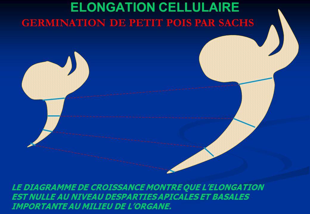 ELONGATION CELLULAIRE GERMINATION DE PETIT POIS PAR SACHS LE DIAGRAMME DE CROISSANCE MONTRE QUE LELONGATION EST NULLE AU NIVEAU DESPARTIES APICALES ET