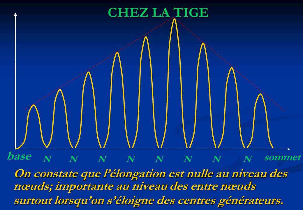 On constate que lélongation est nulle au niveau des nœuds; importante au niveau des entre nœuds surtout lorsquon séloigne des centres générateurs. CHE