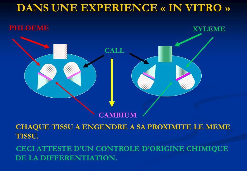 DANS UNE EXPERIENCE « IN VITRO » CALL PHLOEME XYLEME CAMBIUM CHAQUE TISSU A ENGENDRE A SA PROXIMITE LE MEME TISSU. CECI ATTESTE DUN CONTROLE DORIGINE