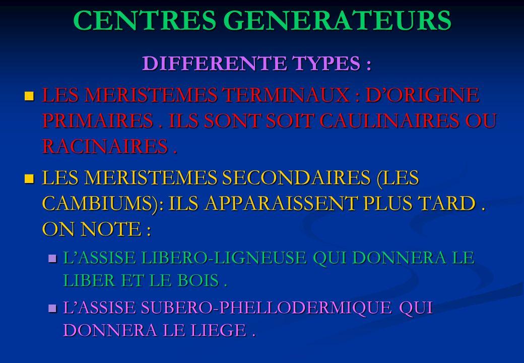 CENTRES GENERATEURS DIFFERENTE TYPES : DIFFERENTE TYPES : LES MERISTEMES TERMINAUX : DORIGINE PRIMAIRES. ILS SONT SOIT CAULINAIRES OU RACINAIRES. LES