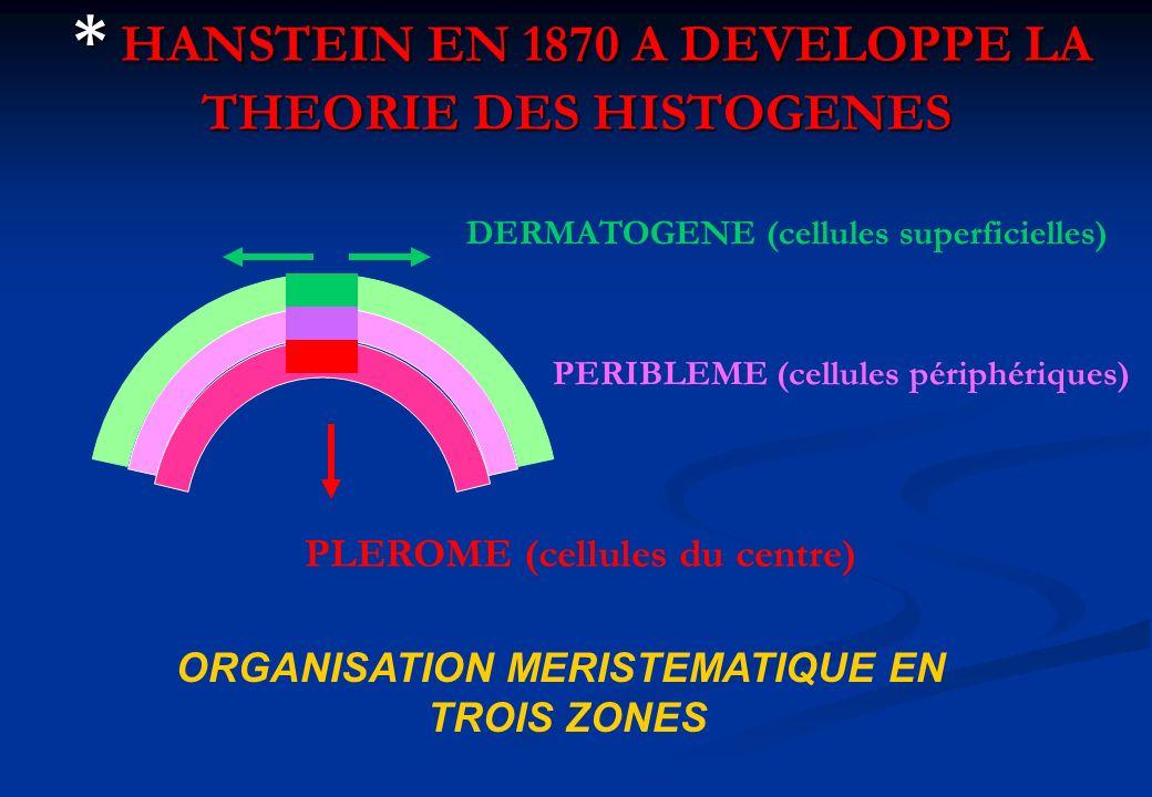 * HANSTEIN EN 1870 A DEVELOPPE LA THEORIE DES HISTOGENES * HANSTEIN EN 1870 A DEVELOPPE LA THEORIE DES HISTOGENES DERMATOGENE (cellules superficielles