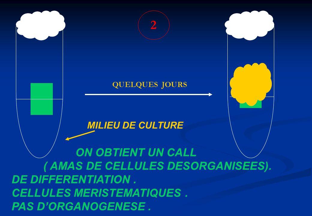 2 MILIEU DE CULTURE QUELQUES JOURS ON OBTIENT UN CALL ( AMAS DE CELLULES DESORGANISEES). DE DIFFERENTIATION. CELLULES MERISTEMATIQUES. PAS DORGANOGENE