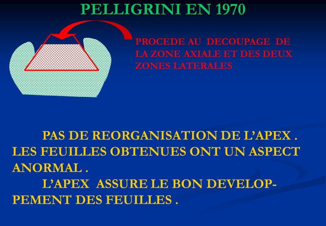 PELLIGRINI EN 1970 PROCEDE AU DECOUPAGE DE LA ZONE AXIALE ET DES DEUX ZONES LATERALES PAS DE REORGANISATION DE LAPEX. LES FEUILLES OBTENUES ONT UN ASP