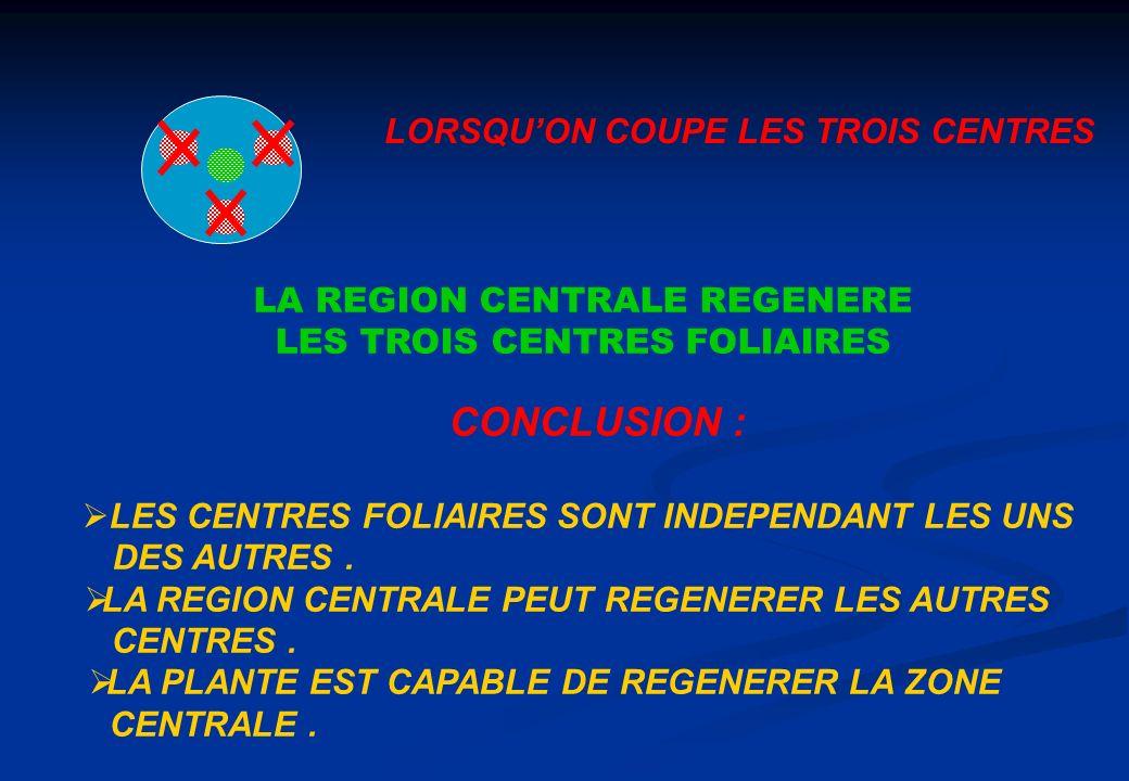LORSQUON COUPE LES TROIS CENTRES LA REGION CENTRALE REGENERE LES TROIS CENTRES FOLIAIRES CONCLUSION : LES CENTRES FOLIAIRES SONT INDEPENDANT LES UNS D