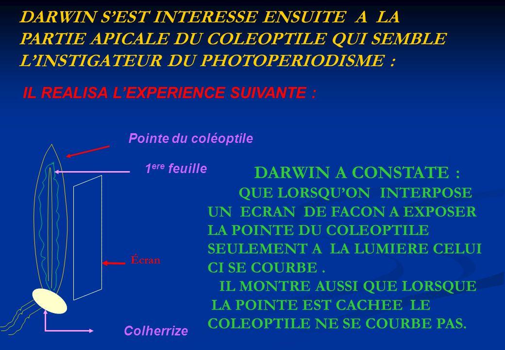 IL REALISA LEXPERIENCE SUIVANTE : 1 ere feuille Pointe du coléoptile Colherrize DARWIN A CONSTATE : QUE LORSQUON INTERPOSE UN ECRAN DE FACON A EXPOSER
