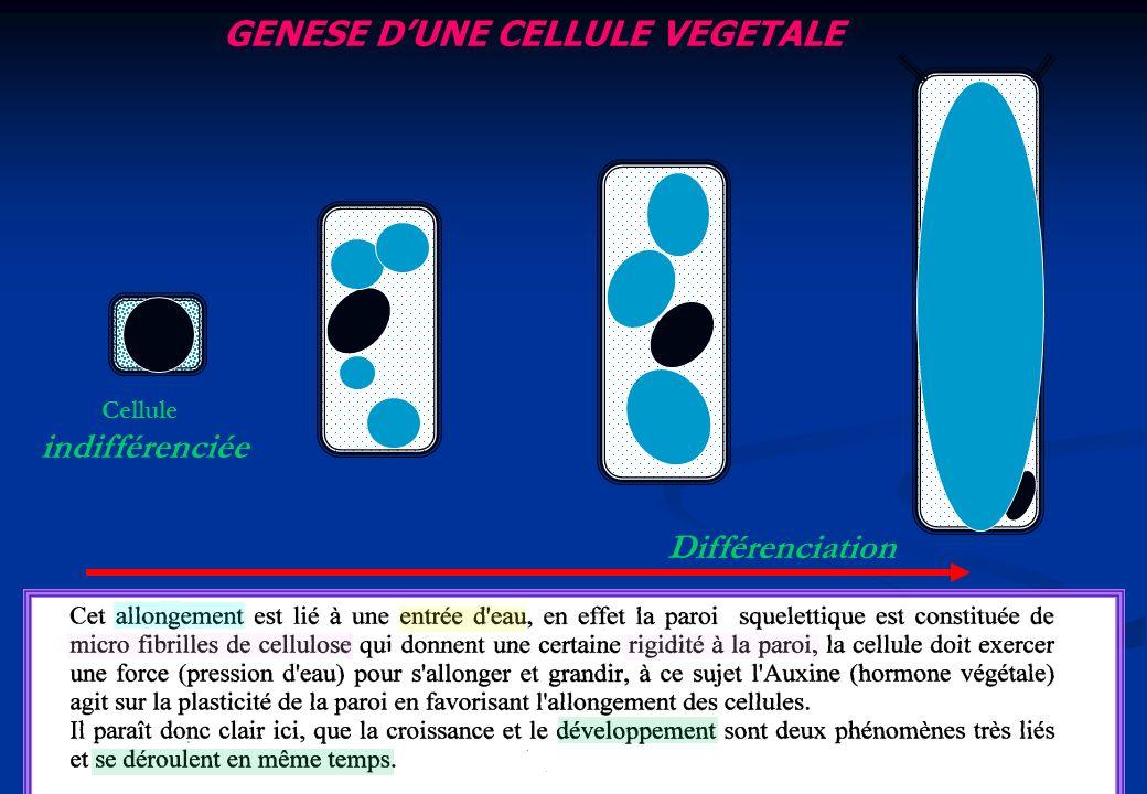 GENESE DUNE CELLULE VEGETALE Cellule indifférenciée Différenciation
