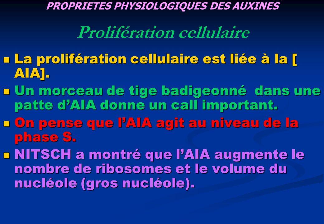 La prolifération cellulaire est liée à la [ AIA]. La prolifération cellulaire est liée à la [ AIA]. Un morceau de tige badigeonné dans une patte dAIA