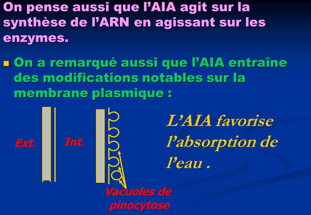 On pense aussi que lAIA agit sur la synthèse de lARN en agissant sur les enzymes. On a remarqué aussi que lAIA entraîne des modifications notables sur
