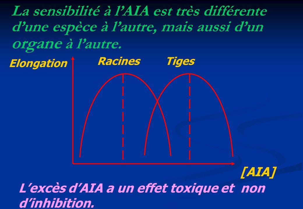 [AIA] Elongation Racines Tiges Lexcès dAIA a un effet toxique et non dinhibition. La sensibilité à lAIA est très différente dune espèce à lautre, mais