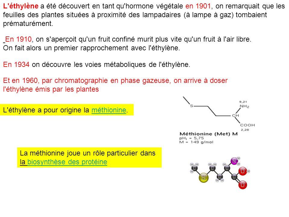 L'éthylène a été découvert en tant qu'hormone végétale en 1901, on remarquait que les feuilles des plantes situées à proximité des lampadaires (à lamp