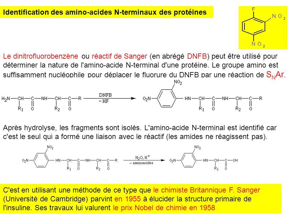 Identification des amino-acides N-terminaux des protéines Le dinitrofluorobenzène ou réactif de Sanger (en abrégé DNFB) peut être utilisé pour détermi