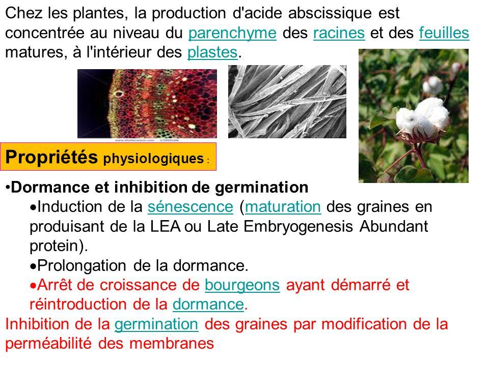 Chez les plantes, la production d'acide abscissique est concentrée au niveau du parenchyme des racines et des feuilles matures, à l'intérieur des plas