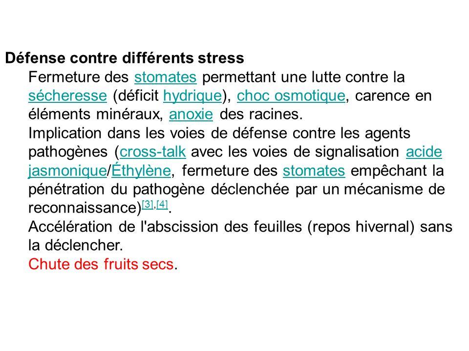 Défense contre différents stress Fermeture des stomates permettant une lutte contre la sécheresse (déficit hydrique), choc osmotique, carence en éléme