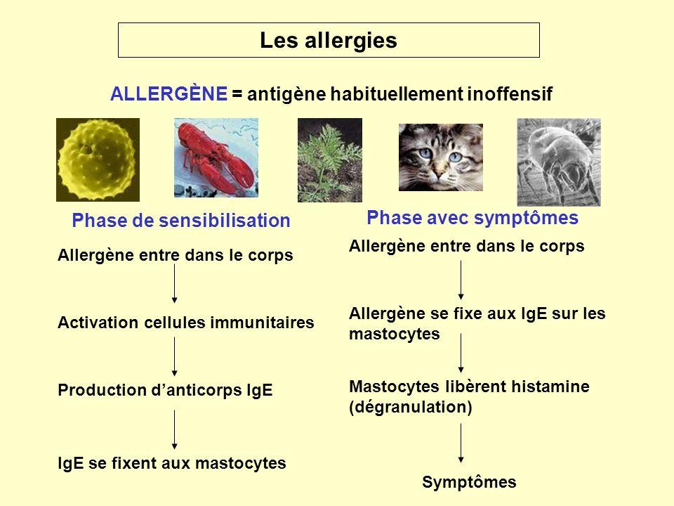 Les allergies ALLERGÈNE = antigène habituellement inoffensif Phase de sensibilisation Phase avec symptômes Allergène entre dans le corps Activation ce