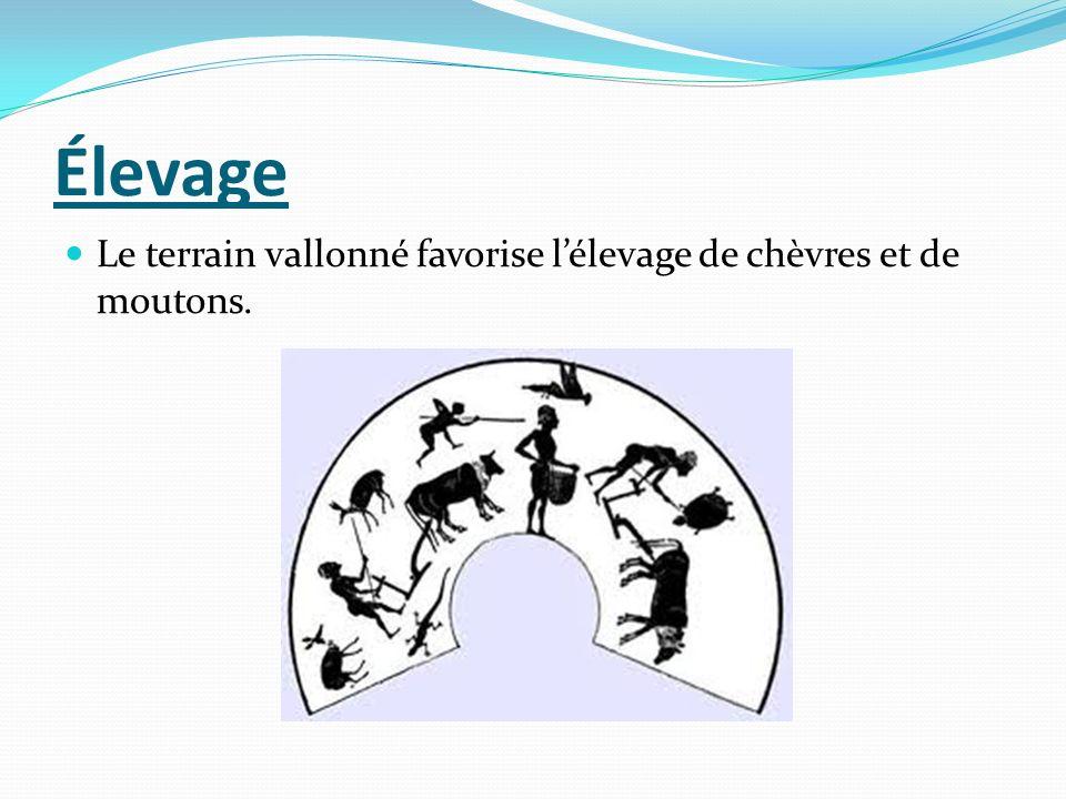 Élevage Le terrain vallonné favorise lélevage de chèvres et de moutons.