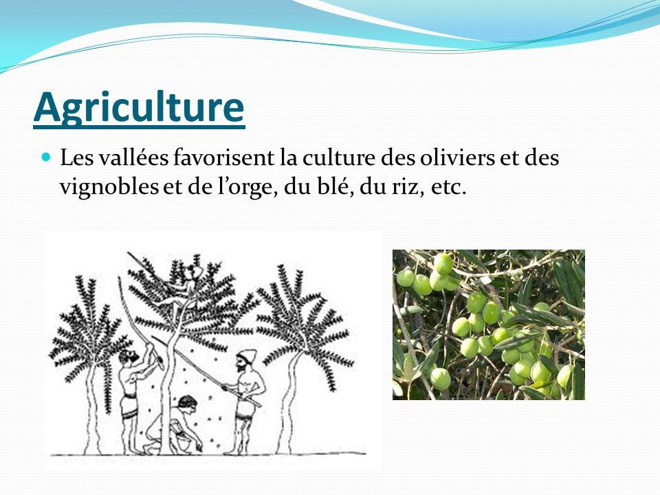 Agriculture Les vallées favorisent la culture des oliviers et des vignobles et de lorge, du blé, du riz, etc.