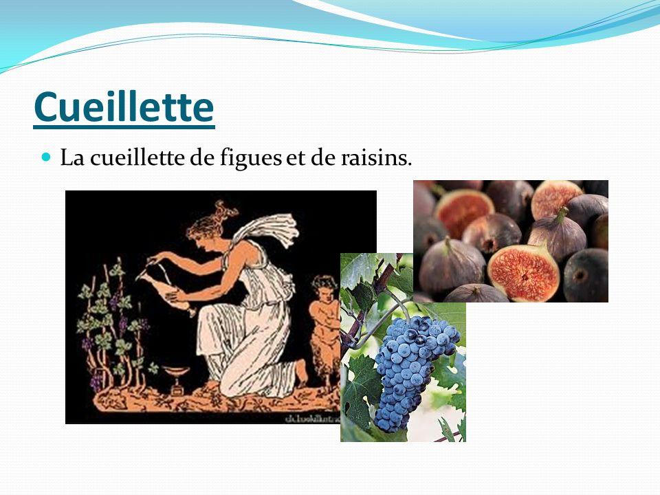 Cueillette La cueillette de figues et de raisins.