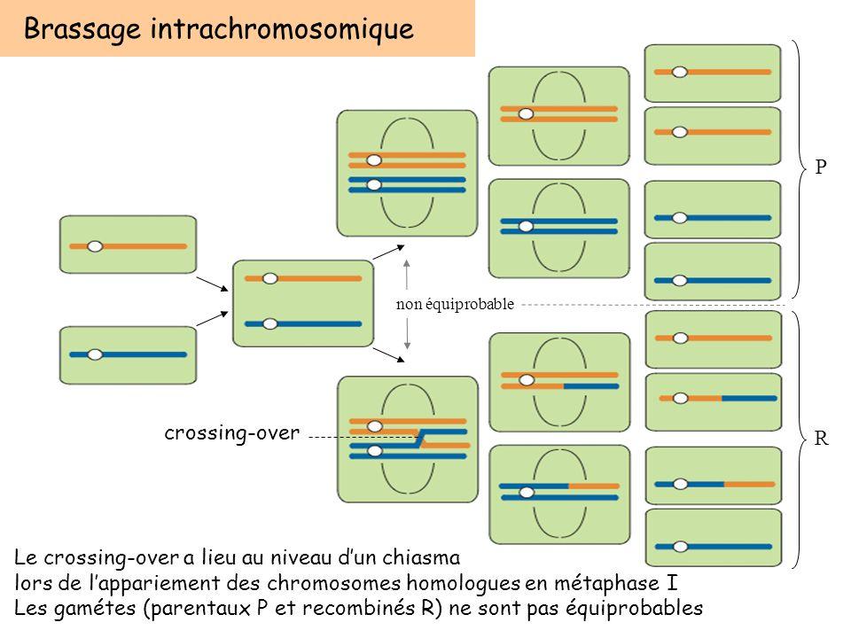 Brassage intrachromosomique Le crossing-over a lieu au niveau dun chiasma lors de lappariement des chromosomes homologues en métaphase I Les gamétes (