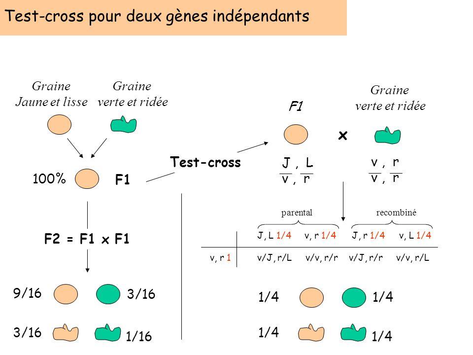 Test-cross pour deux gènes indépendants F1 Graine verte et ridée Graine Jaune et lisse 100% 9/16 3/16 1/16 F2 = F1 x F1 Test-cross F1 Graine verte et