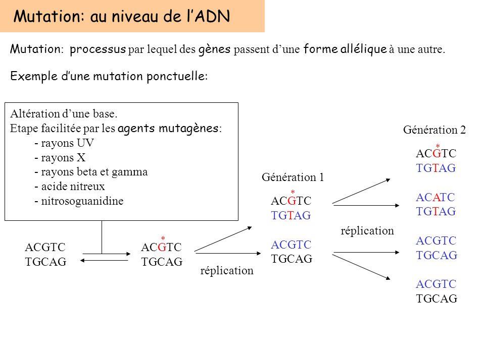 Altération dune base Mutation: au niveau de lADN Mutation : processus par lequel des gènes passent dune forme allélique à une autre. ACGTC TGCAG ACGTC