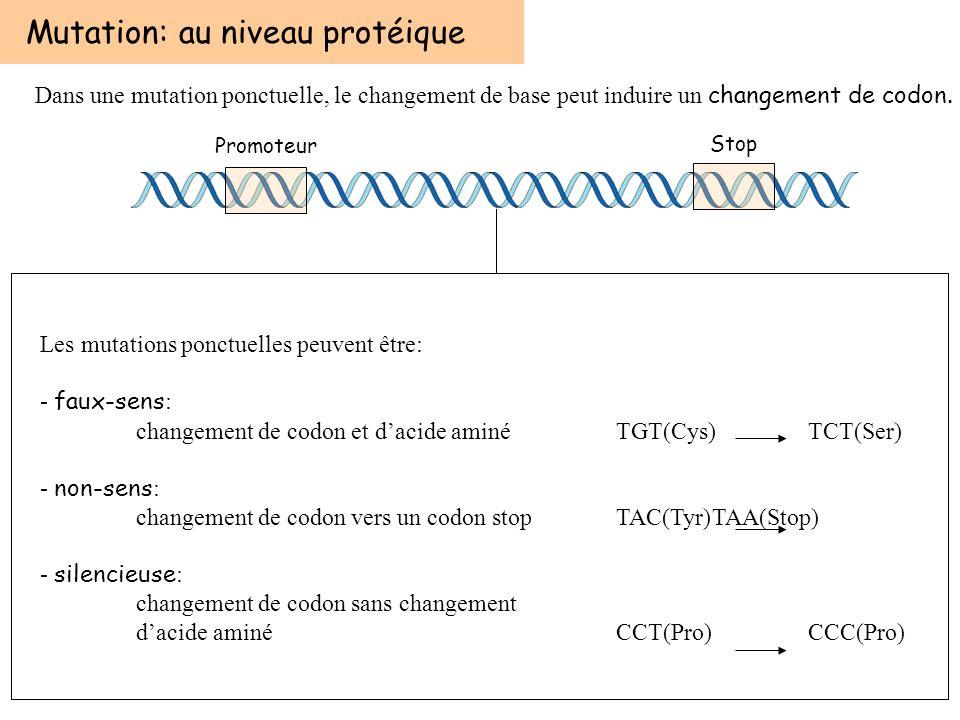 Les mutations ponctuelles peuvent être: - faux-sens : changement de codon et dacide aminé TGT(Cys)TCT(Ser) - non-sens : changement de codon vers un co