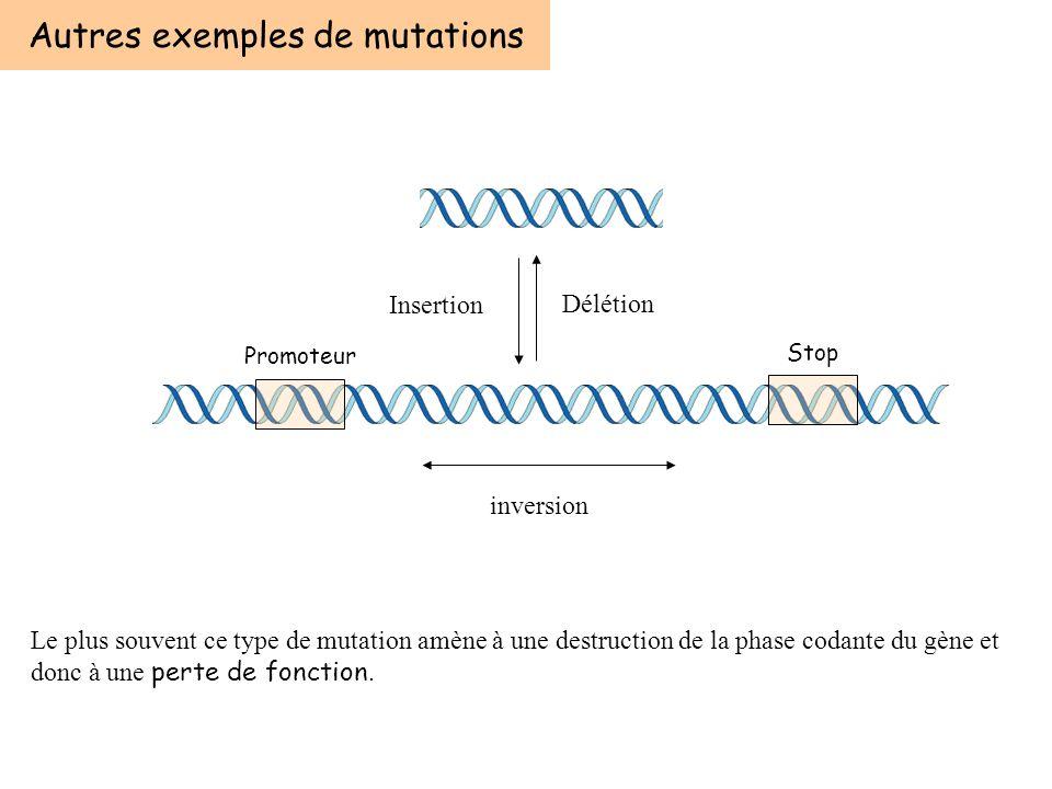 Délétion Insertion Autres exemples de mutations Le plus souvent ce type de mutation amène à une destruction de la phase codante du gène et donc à une