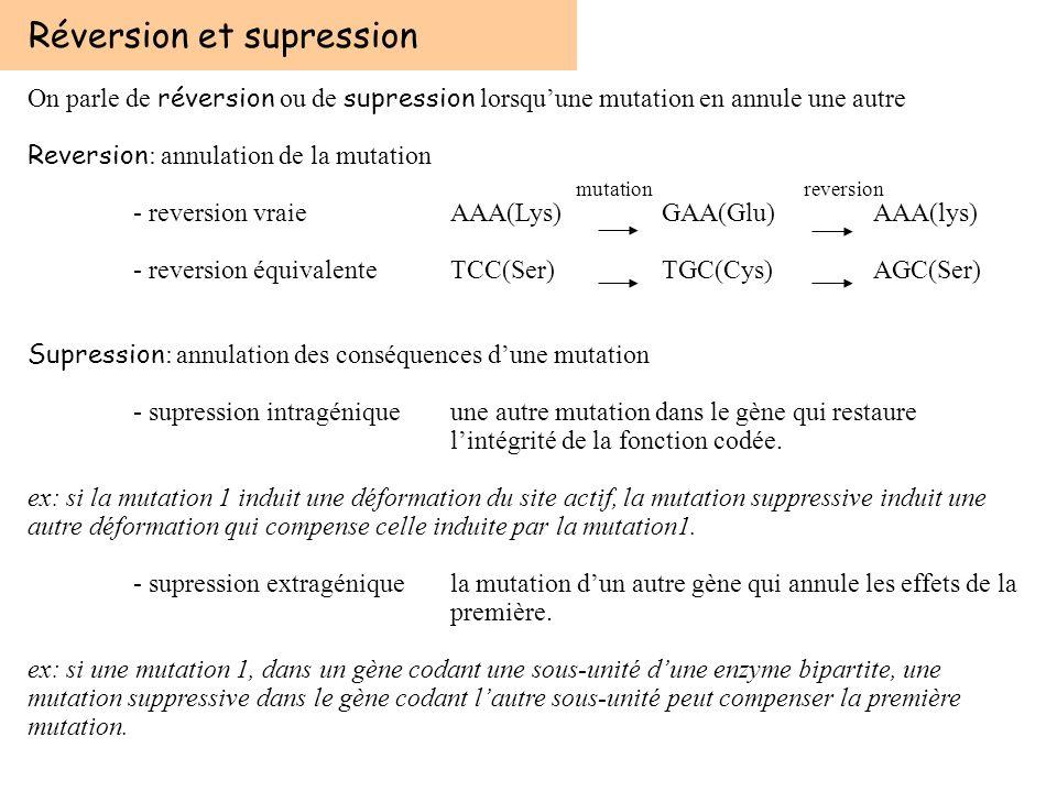 Réversion et supression On parle de réversion ou de supression lorsquune mutation en annule une autre Reversion : annulation de la mutation - reversio