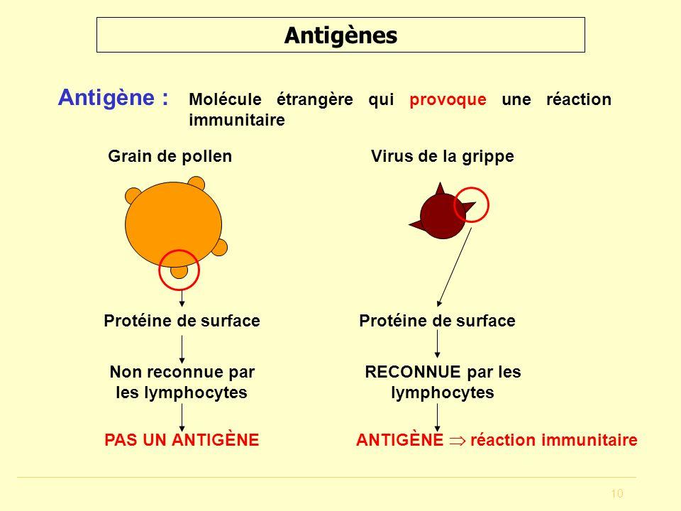 10 Antigènes Antigène : Molécule étrangère qui provoque une réaction immunitaire Grain de pollen Protéine de surface Non reconnue par les lymphocytes