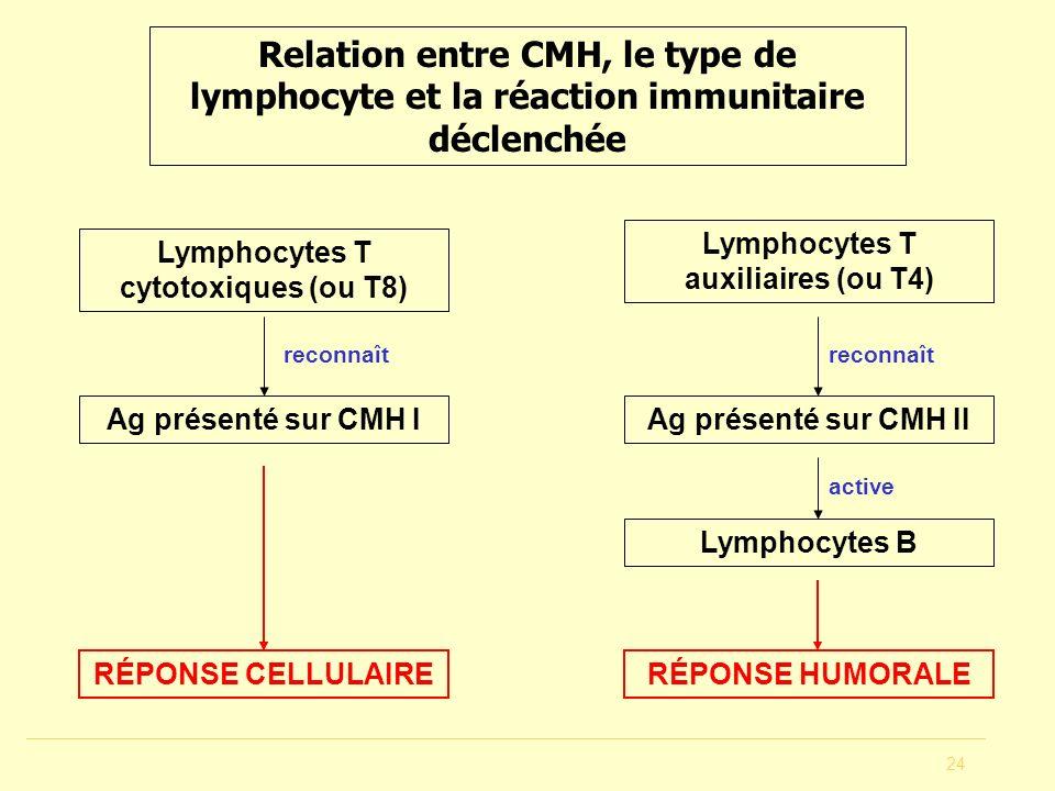 24 Relation entre CMH, le type de lymphocyte et la réaction immunitaire déclenchée Ag présenté sur CMH I Lymphocytes T cytotoxiques (ou T8) RÉPONSE CE