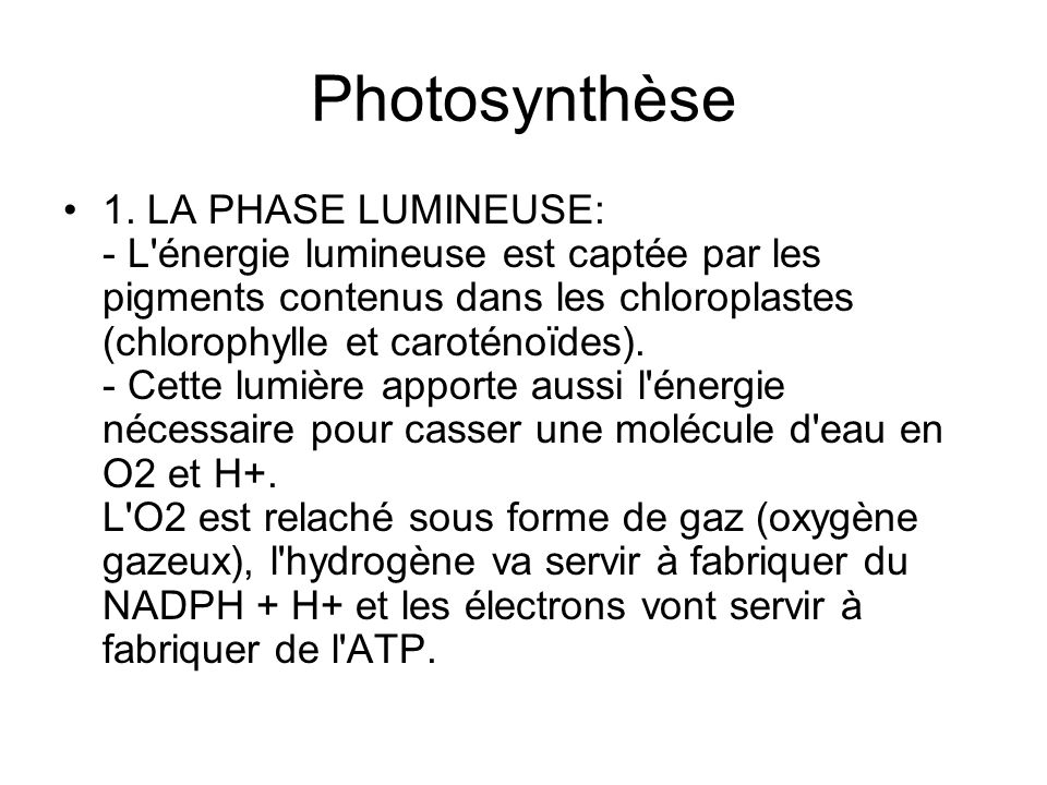 Photosynthèse 1. LA PHASE LUMINEUSE: - L'énergie lumineuse est captée par les pigments contenus dans les chloroplastes (chlorophylle et caroténoïdes).