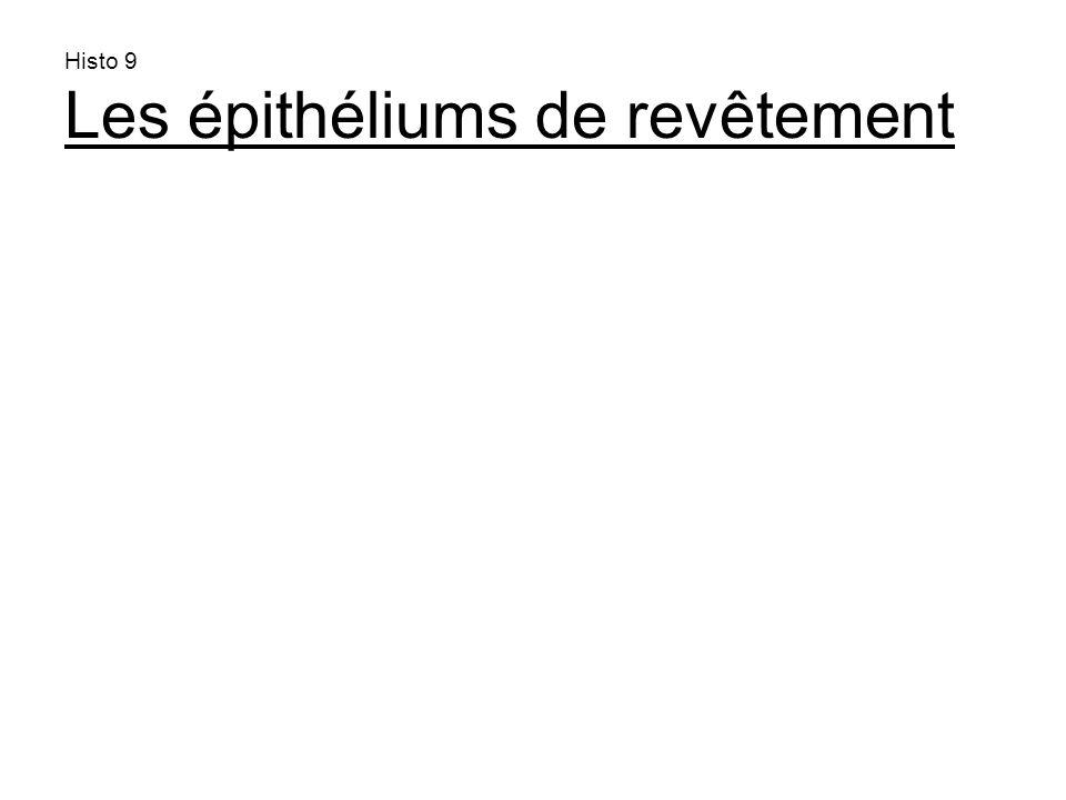 histo10 a- Les épithéliums de revêtement revêtent lextérieur du corps et les cavités dea- Les épithéliums de revêtement revêtent lextérieur du corps et les cavités de lorganisme.lorganisme.
