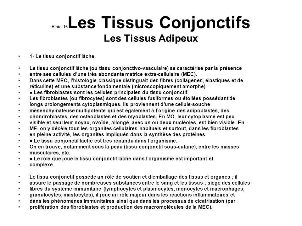 Histo17 Les Tissus Conjonctifs 2- Le tissu réticulaire.