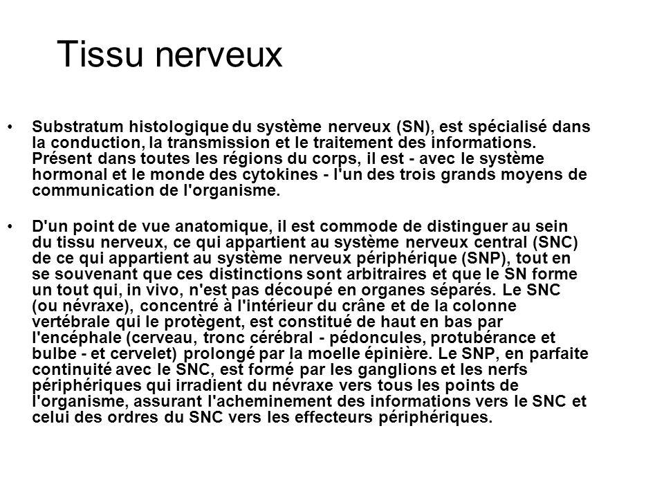 D un point de vue physiologique, on distingue volontiers dans l ensemble du SNC et SNP ce qui appartient à la vie de relation et ce qui appartient à la vie végétative (système nerveux végétatif ou autonome : SNV ou SNA) ; on a tendance actuellement à isoler également un SN intestinal ou SN entérique (SNE).
