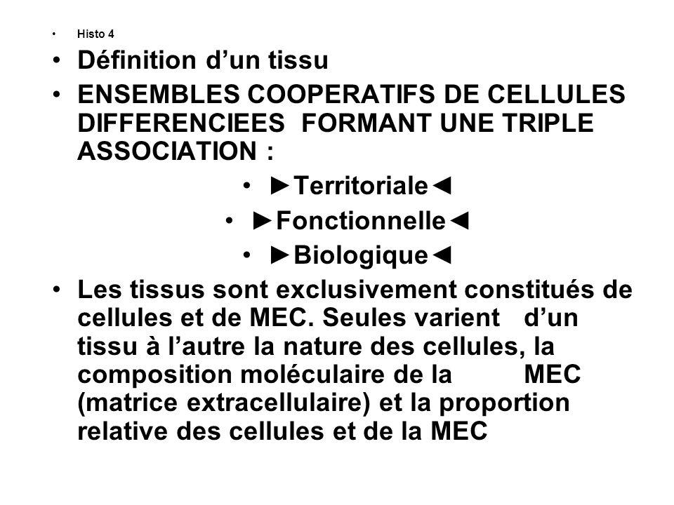 Histo 5 Association Territoriale Habituellement, les tissus forment des ensembles topographiquement bien individualisés, souvent par une limite précise comme la membrane basale Qui sépare les épithéliums du tissu conjonctif sous-jacent ou environnant.