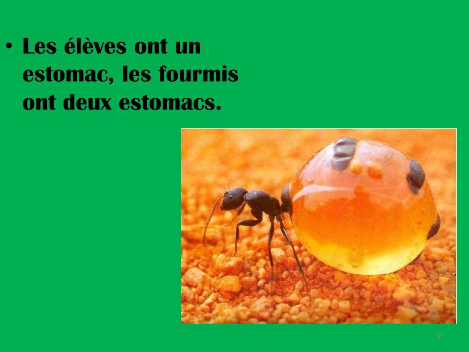 Les élèves sont grands, les fourmis sont petites. 8