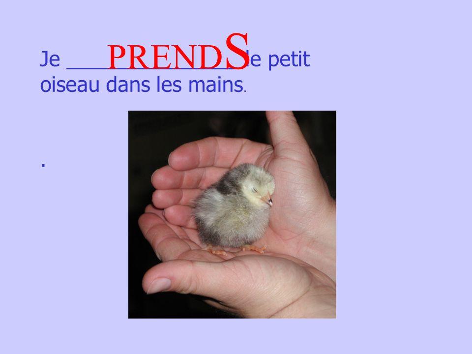 Je _______________ le petit oiseau dans les mains.. PREND S