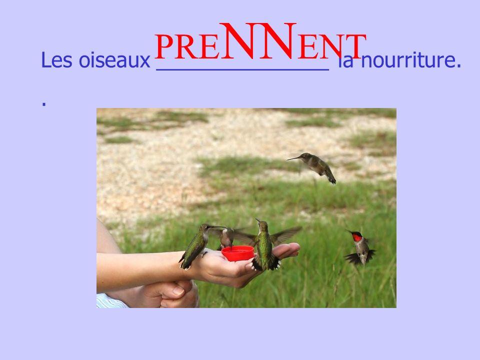 Les oiseaux _______________ la nourriture.. PRE NN ENT