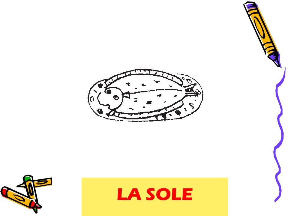 sole LA SOLE