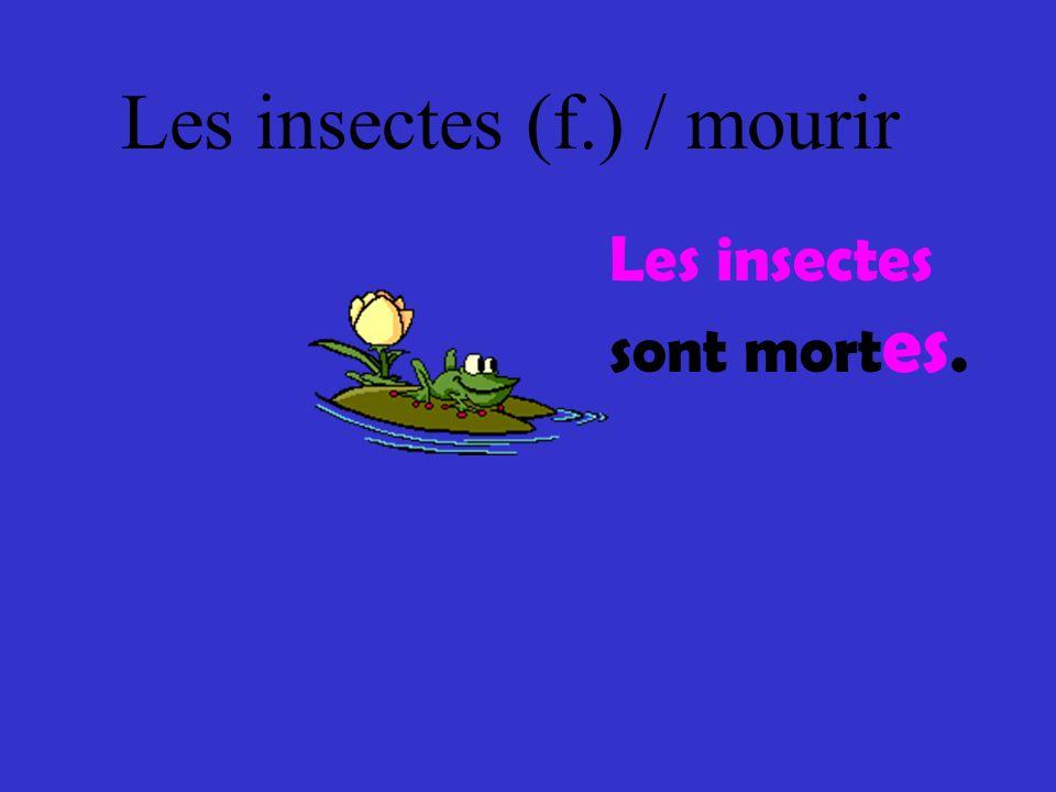 Les insectes (f.) / mourir Les insectes sont mort es.