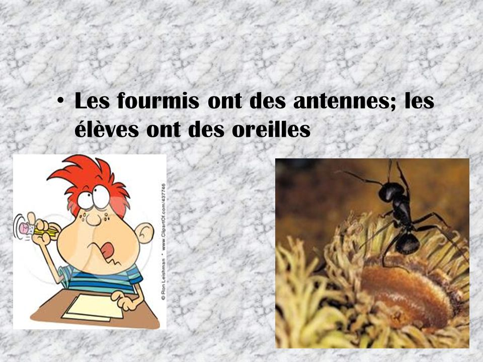Les fourmis ont des antennes; les élèves ont des oreilles 13