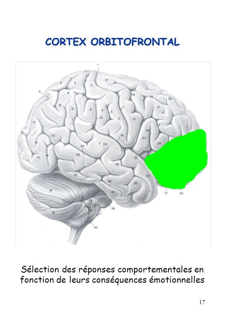 17 CORTEX ORBITOFRONTAL Sélection des réponses comportementales en fonction de leurs conséquences émotionnelles