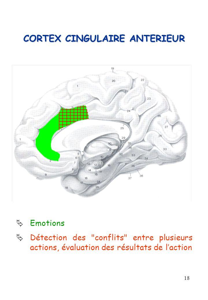 18 CORTEX CINGULAIRE ANTERIEUR Emotions Détection des
